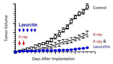 ヒト口腔癌細胞株(扁平上皮癌)に対する放射線と レブリチンの併用における持続的抗腫瘍効果